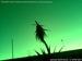 Webcam de Vasilitsa d'il y a 2 jours